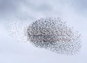 птицы ростовской области картинках.