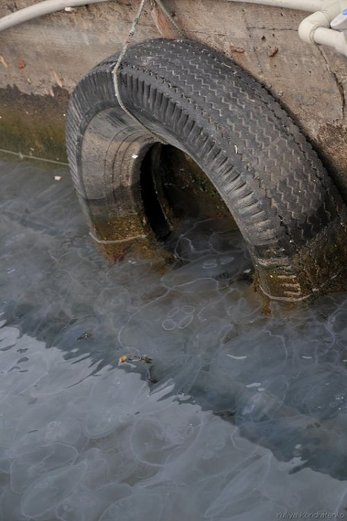 нашествие медуз Севастополь