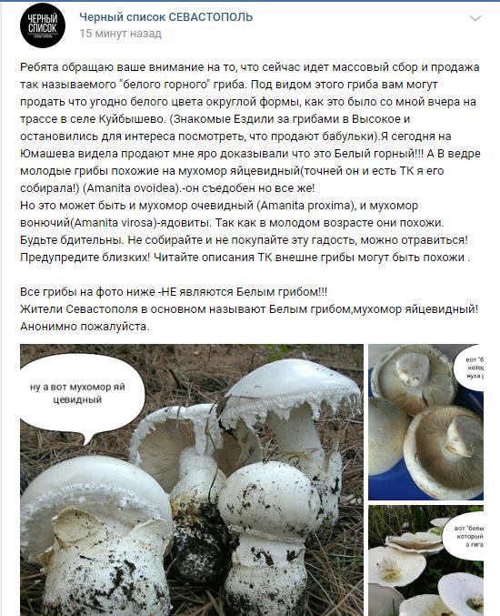 Севсети#570: коварный гриб, коварная прокуратура и счастливый Михалыч