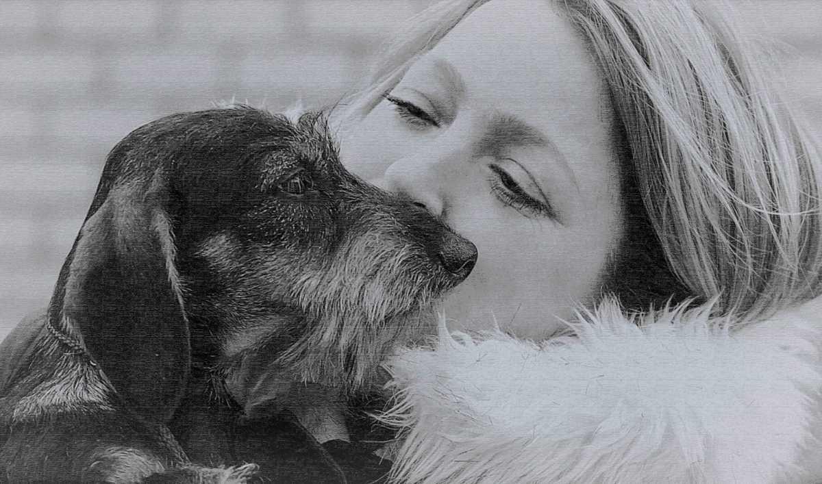 Как собакам и их владельцам в дорогом Крыму живется