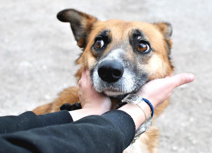 Налог на животных в Крыму: платить или выкинуть питомца?