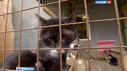 ForPost - В Думу внесен проект закона об усилении наказания за жестокое обращение с животными