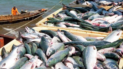 ForPost - В России планируют изменить правила рыболовства
