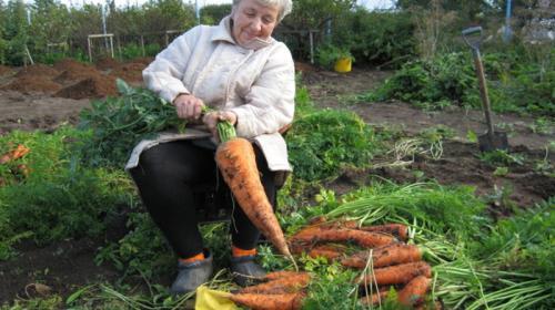 ForPost - Россельхознадзор опроверг запрет на выращивание овощей и фруктов на даче