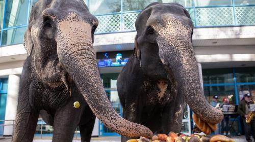 ForPost- Слоны из Германии устроили шоу в центре Симферополя
