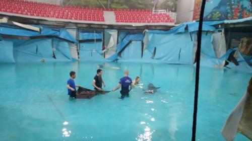 ForPost- Дельфины спасены от мучительной смерти в Алуште