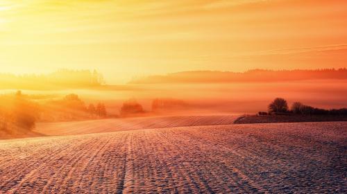 ForPost- Аномально теплая осень в Крыму чревата неурожаем озимых
