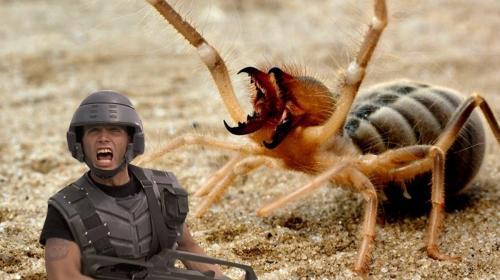 ForPost - В Крыму обнаружили редкого гигантского паука