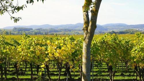 ForPost- Вкус севастопольского вина сохранит новый закон и будущий Генплан