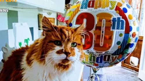 ForPost - В Великобритании умер самый старый в мире кот