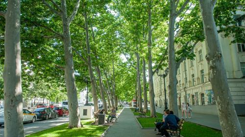 ForPost - Сажать новые деревья вместо срубленных в Севастополе обещают, где нужно