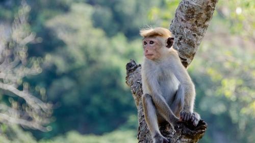 ForPost - В Британии отказываются продавать кокосы, собранные… обезьянами
