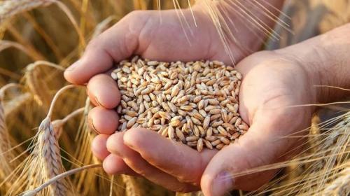 ForPost - National Interest испугался запрета на экспорт зерна из России