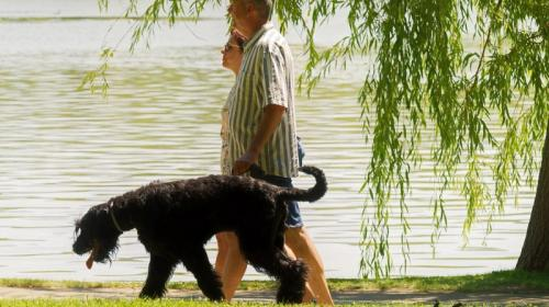 ForPost- В столице Крыма запретили выгуливать собак в парках