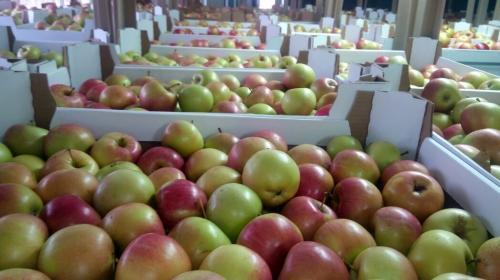 ForPost - В России резко подорожали яблоки