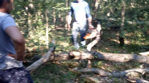 ForPost - В Севастополе хотели массово вырубить лес