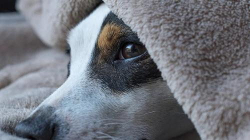 ForPost - Запойный челябинец выкинул собаку с балкона