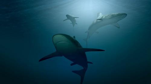 ForPost - Австралийские дроны начали войну против акул