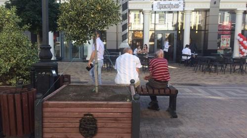 ForPost- Маньчжурские клены в центре крымской столицы не понравились вандалам