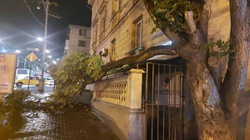 ForPost - В Севастополе во время грозы рухнуло полдерева