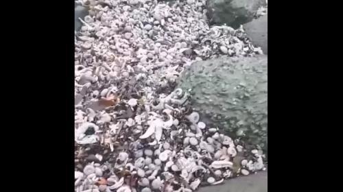 ForPost - Минобороны прокомментировало загрязнение воды на Камчатке