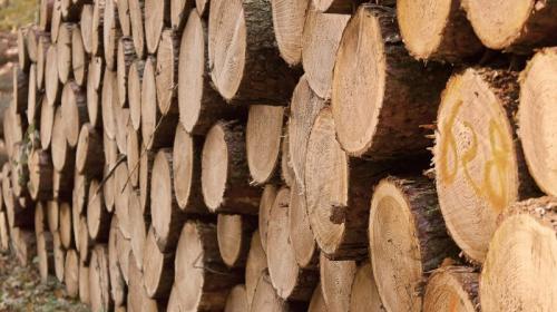 ForPost - Подсчитаны кубометры уходящего в Китай российского леса
