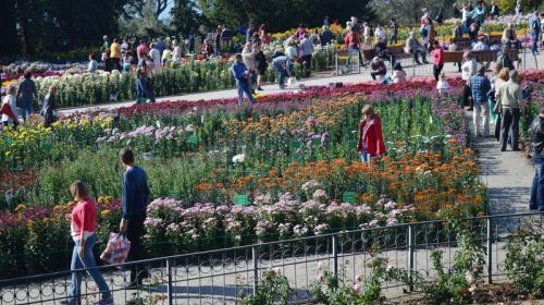 ForPost- Бал хризантем в Крыму пройдет вживую, невзирая на коронавирус