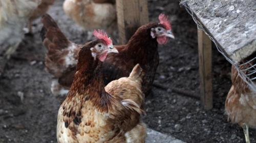 ForPost - Жительница Украины купила в супермаркете светящуюся в темноте курицу
