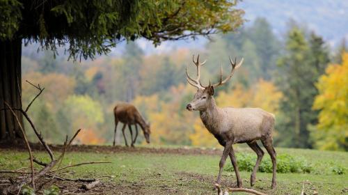 ForPost- «Это волшебство»: в Крыму туристы с рук кормят диких оленей (ВИДЕО)