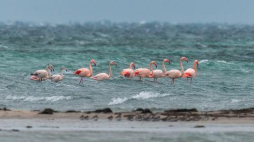 ForPost- В Крым прилетела стая розовых фламинго (ФОТО)