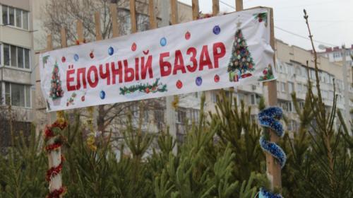ForPost- В Севастополе открылись ёлочные базары