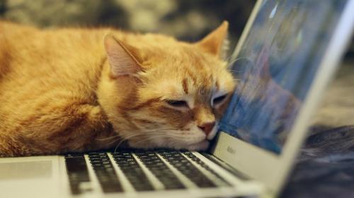 ForPost- Раскрыто влияние кошек на хозяев на удалённой работе