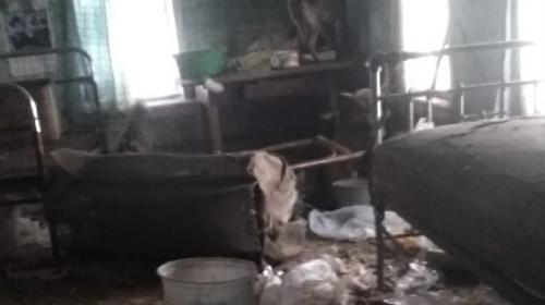 ForPost - В лачуге без отопления нашли замерзшую старушку и 15 собак