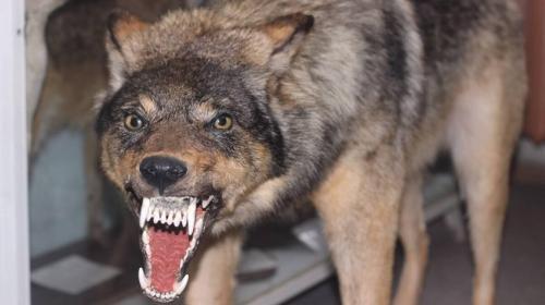 ForPost- Севсети#1163: Микропротест в Севастополе, крымский волк и соседский фейк