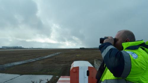 ForPost- Как главный аэропорт Крыма борется с птицами