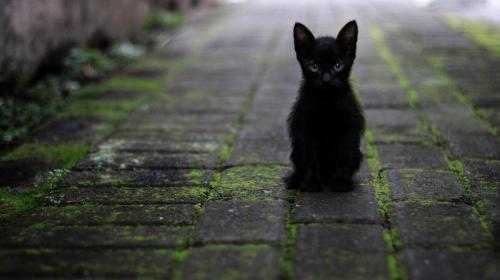 ForPost- В Крыму откроют парк породистых и бездомных кошек