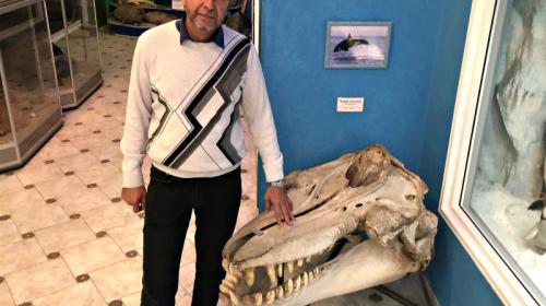 ForPost- В Крыму покажут самый большой в Европе череп косатки