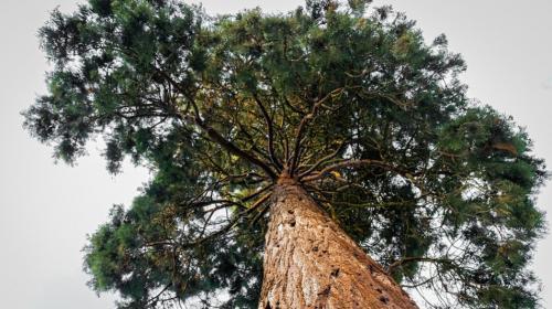 ForPost- Составлен список самых красивых растений для озеленения Севастополя