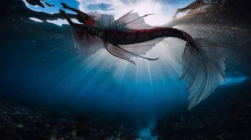 ForPost - Крым аномальный: здесь встречают русалок, морских змеев и НЛО