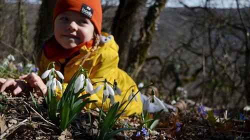 ForPost - Дикие и красивые: где в горном Крыму любоваться первоцветами