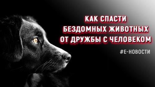 ForPost - Е-новости: Как спасти бездомных животных от смертельной дружбы с нами