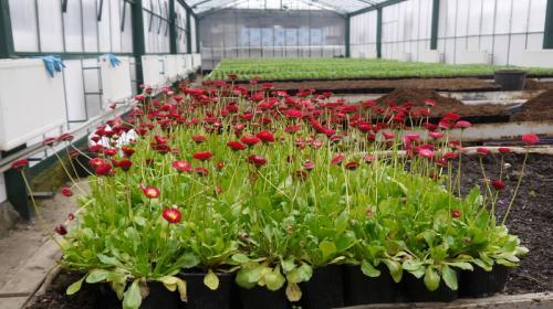 ForPost- Поющий Горзеленхоз: как растят городские цветы в Крыму