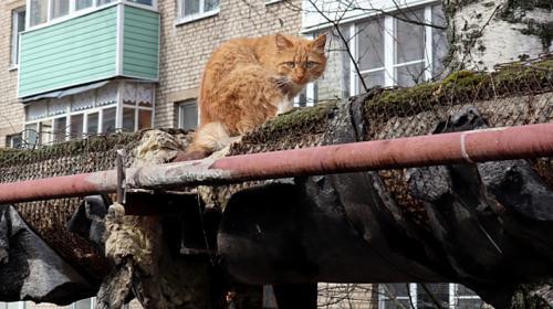 ForPost- Поврежденные теплотрассы в курортном Крыму измерили замерзшими котами