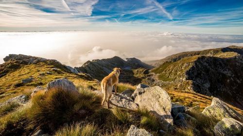 ForPost - Свора бродячих собак разорвала косулю в крымском заповеднике