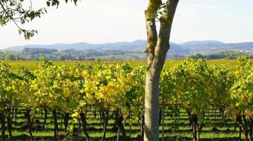 ForPost- Севастопольские ученые изобрели удобрение из винограда