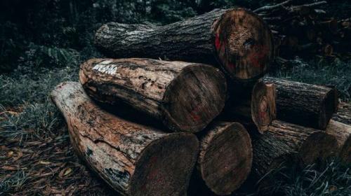 ForPost- В столице Крыма устроят настоящую зачистку деревьев