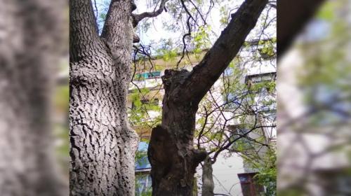 ForPost - На Севастополь напали зелёные существа