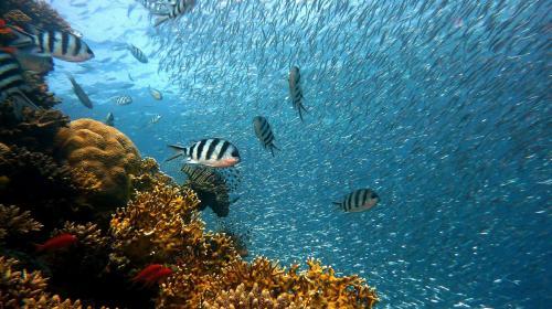 ForPost- Учёные сообщили, что рыбная ловля опасна для климата