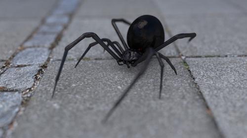 ForPost - В Крыму предложили спасаться от смертоносного паука спичками