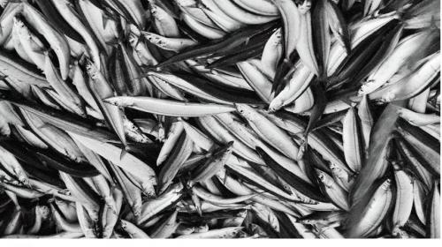 ForPost- Названы пять признаков рыбы, которую нельзя есть